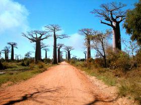http://www.namadagaskare.ru/img/pages/Растительный и животный мир