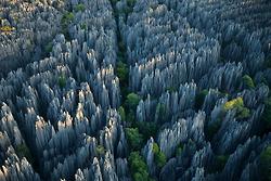 http://www.namadagaskare.ru/img/pages/Расчистка леса огнем